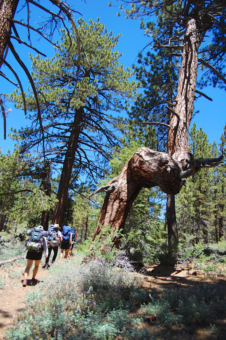 mt-pinos-backpacking